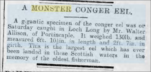 Big Conger eel Loch Long Evening Express 15 Feb 1898.jpeg