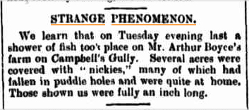 FALL OF FISH Warwick Examiner and Times QLD 24 aug 1901.jpg