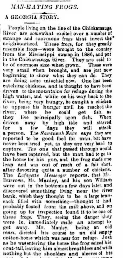 GIANT FROGS The Brisbane Courier 18-nov-1892.jpg