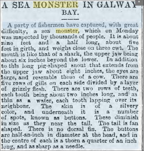 Sea Monster Galway Bay, 4 July 1885 Cardiff Times.jpeg