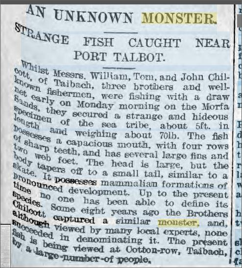 Strange Fish Porth Talbot 6 July 1907 Weekly Mail.jpeg
