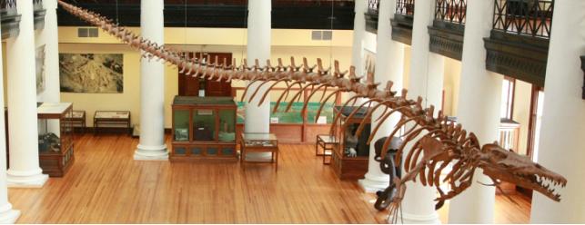 basilosaurus_orig
